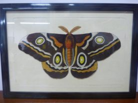 Naturalists Moth 3
